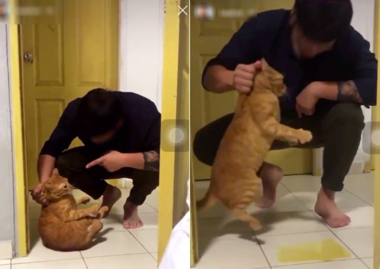 Man in Singapore terrifies ginger tabby cat causing cat to pee