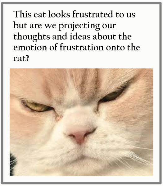 Frustrated cat?