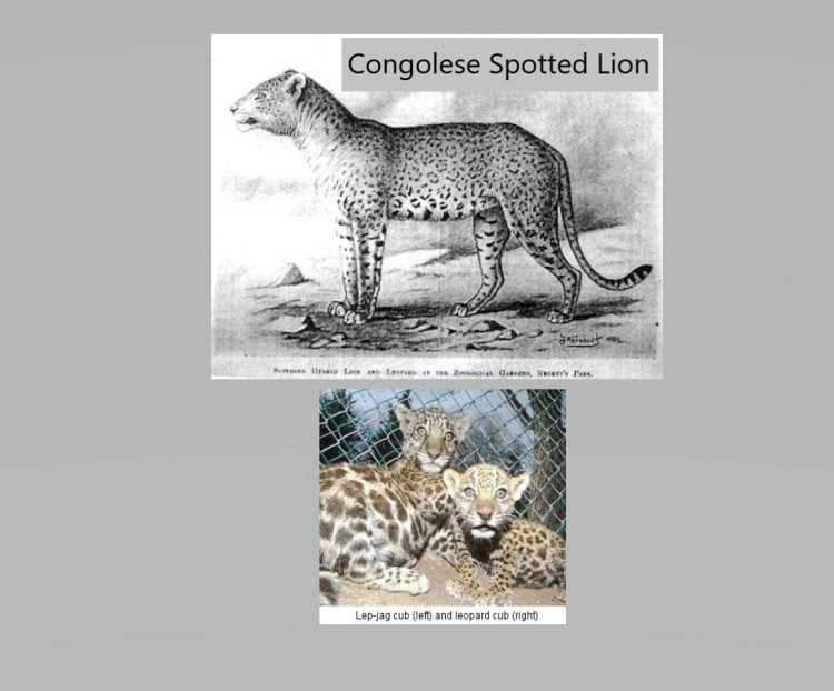 Leopard-jaguar hybrids are possible and have been recorded