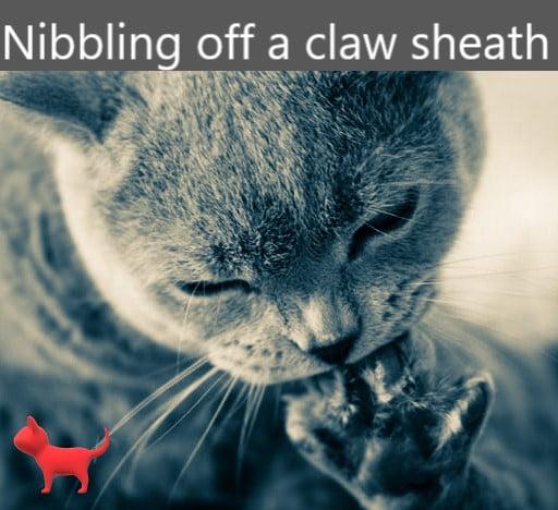 Nibbling off a claw sheath