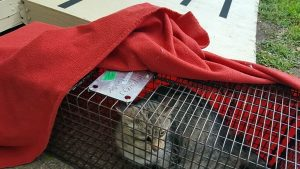 TNR of feral cats