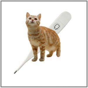 Taking cats temperature