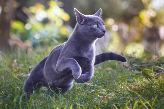 Handsome domestic cat hunting