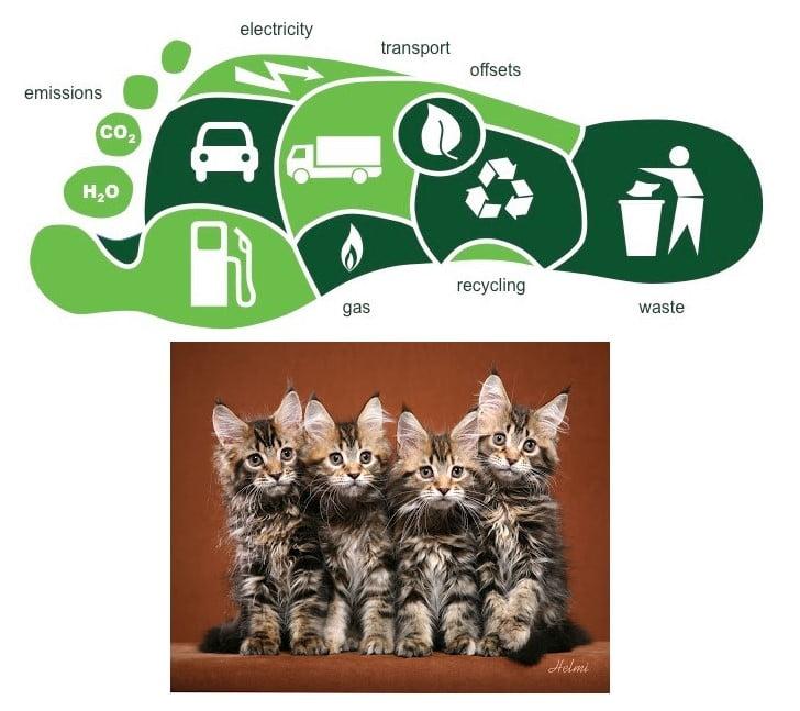 Carbon footprint of domestic cats