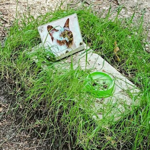 Cat grave in Chernobyl