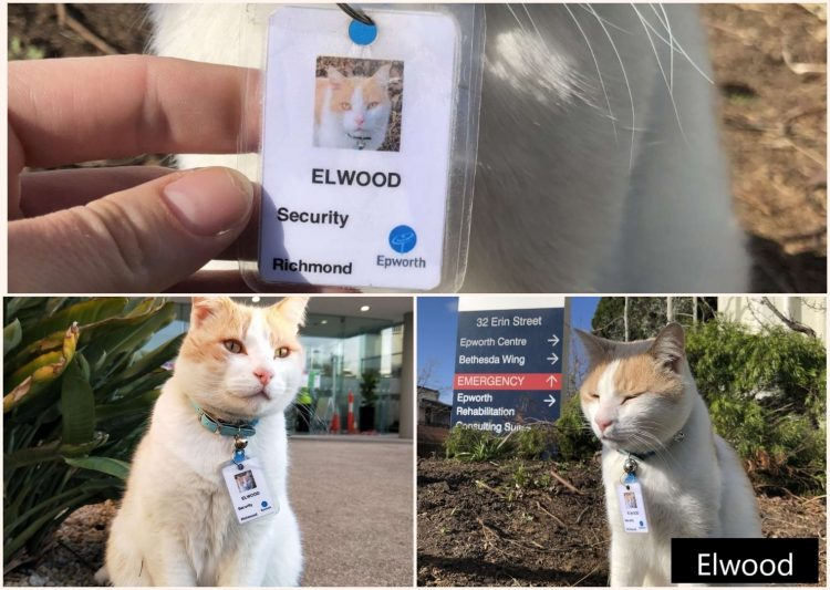 Elwood - a loved hospital cat given employee rights