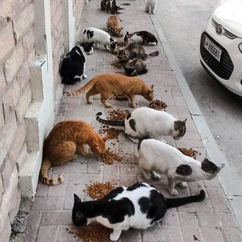 Feeding a colony