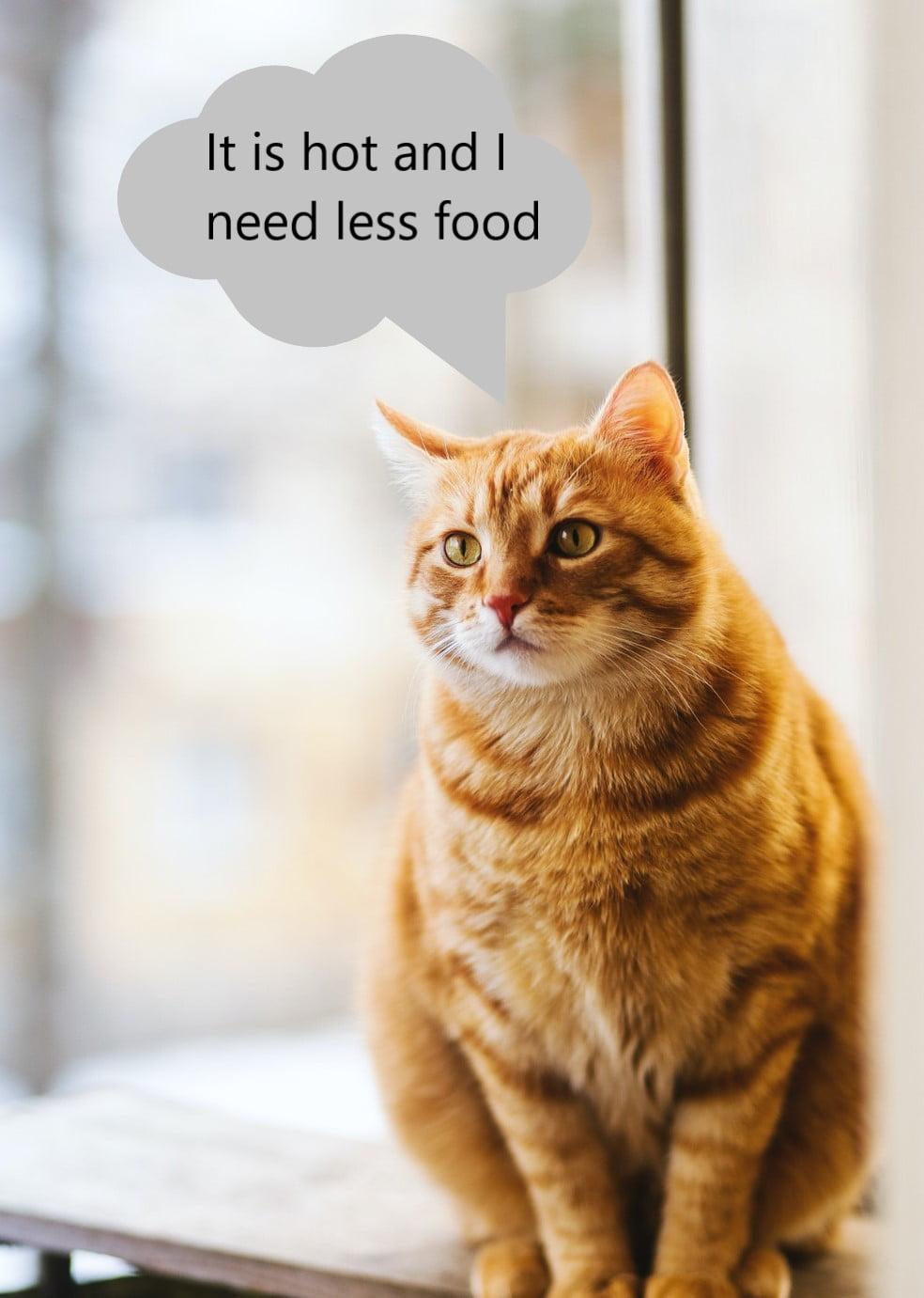 Feline dietary requirements in summer