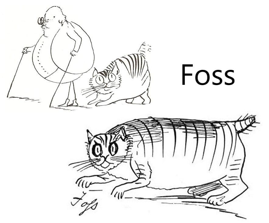 Foss - Edward Lear's cat