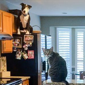 Mako, a dog, behaves like a cat