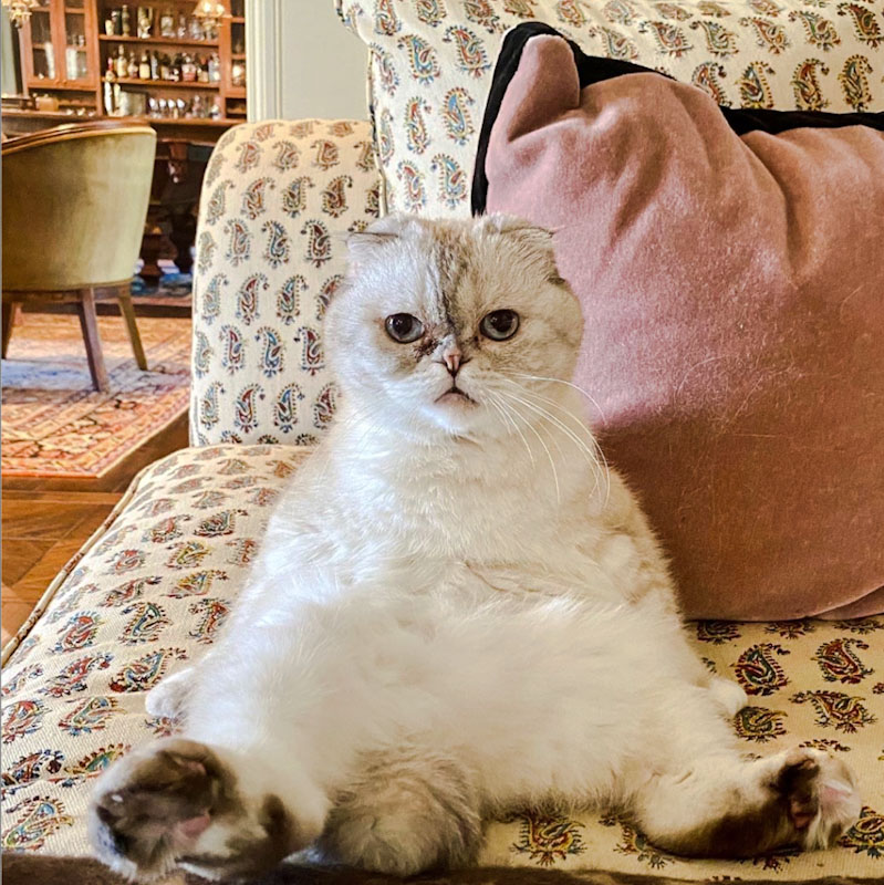 Olivia Benson, the feline partner (with others) of Taylor Swift
