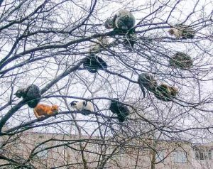 Picture of domestic or feral cats in a tree