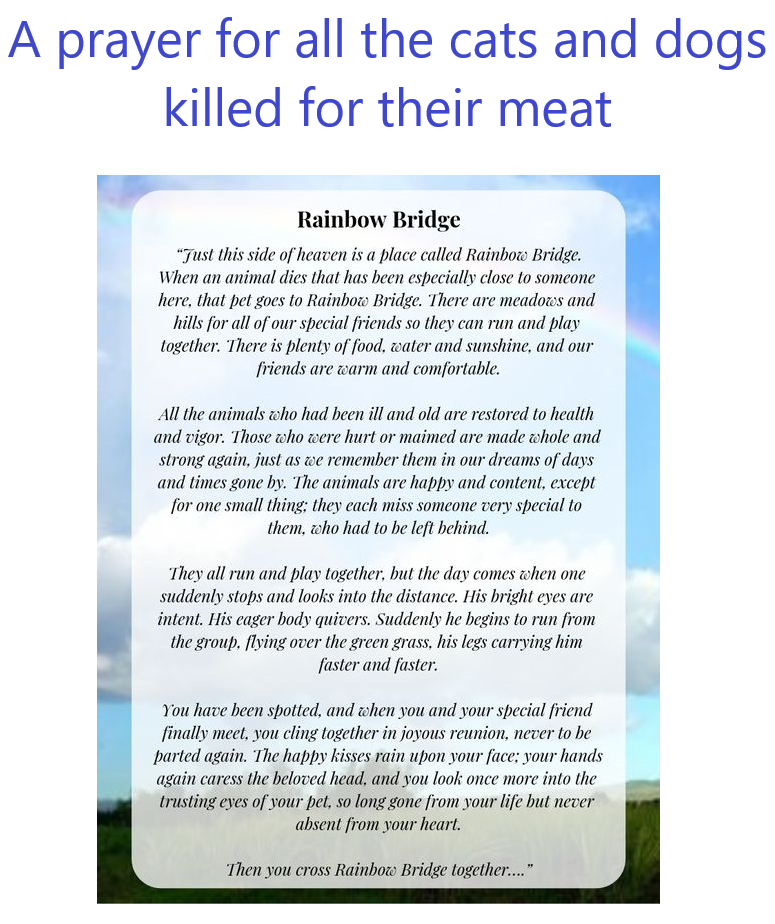 Prayer for cats and dogs killed for their meat