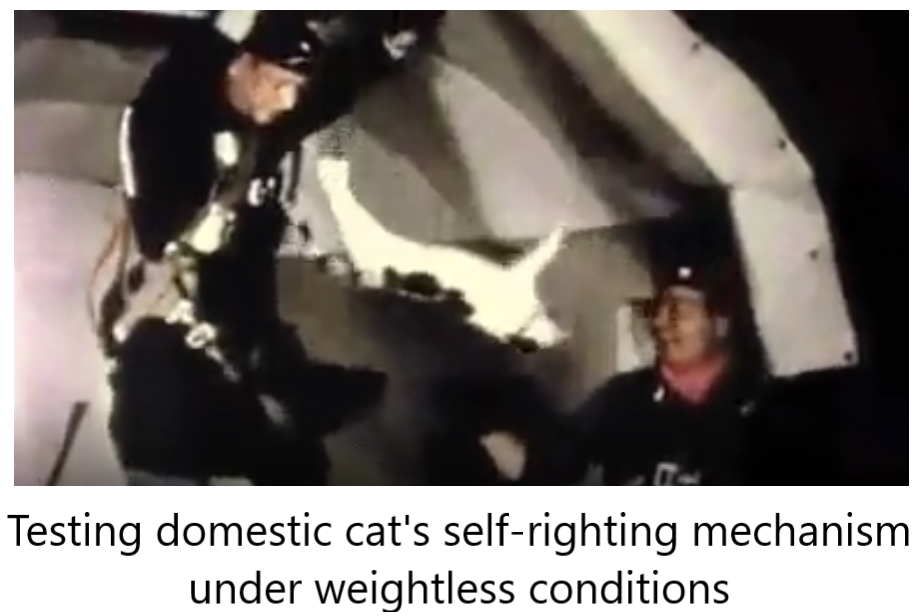 Testing domestic cat's self-righting mechanism under weightless conditions