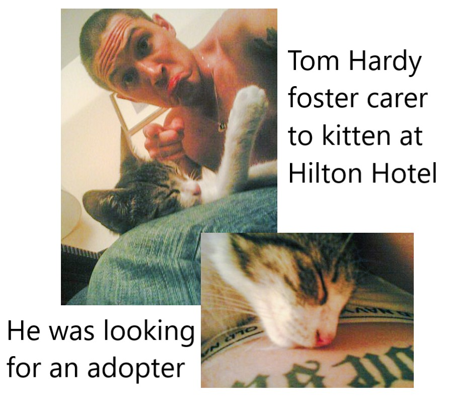 Tom Hardy a foster carer to a stray kitten at Hilton Hotel Bucharest Romania