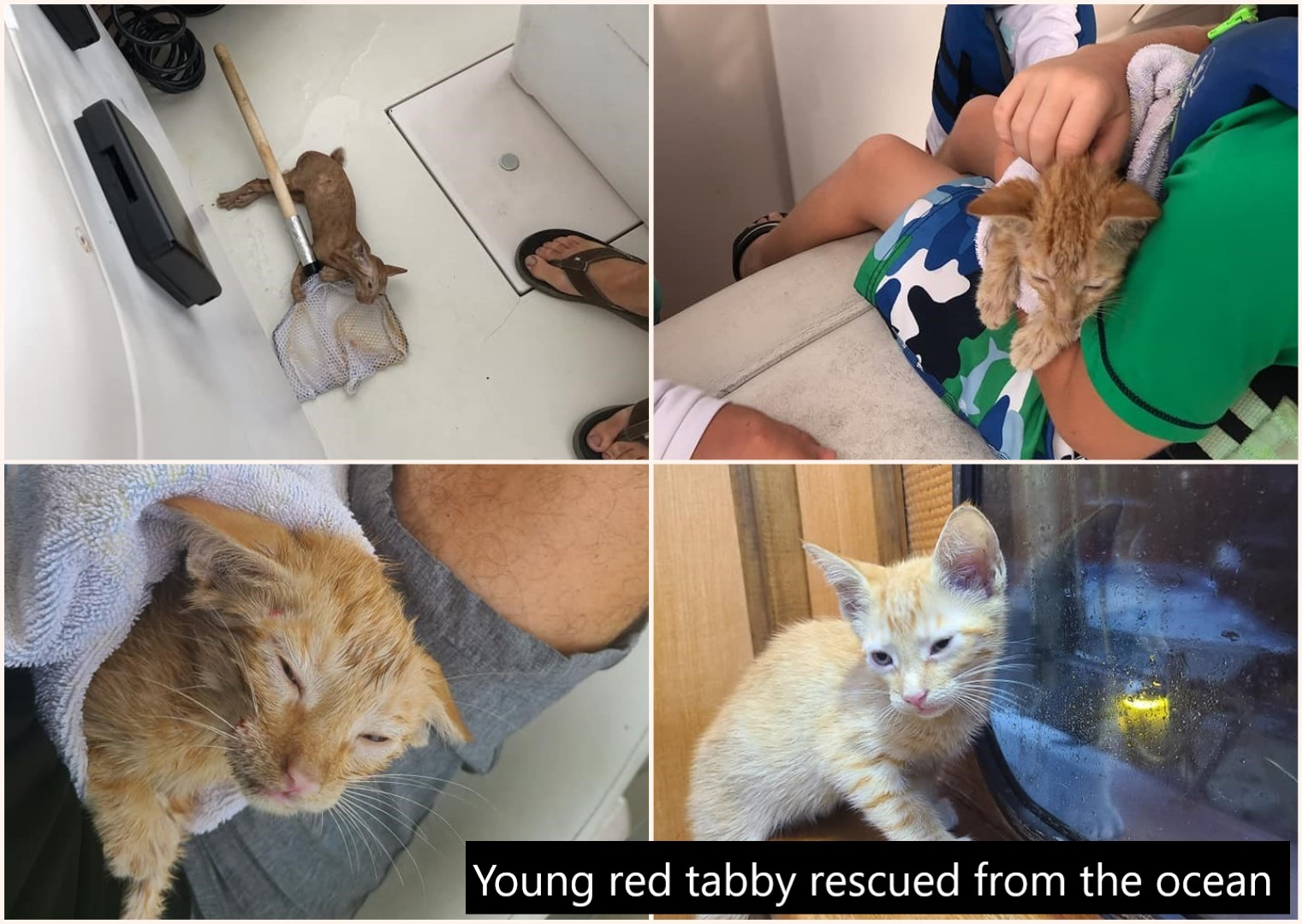 Young ginger tabby fished from the ocean