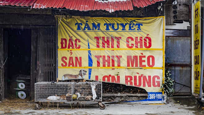 Cat meat trade in Vietnam