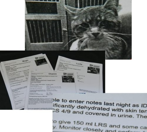 Case paperwork showing on of the cats