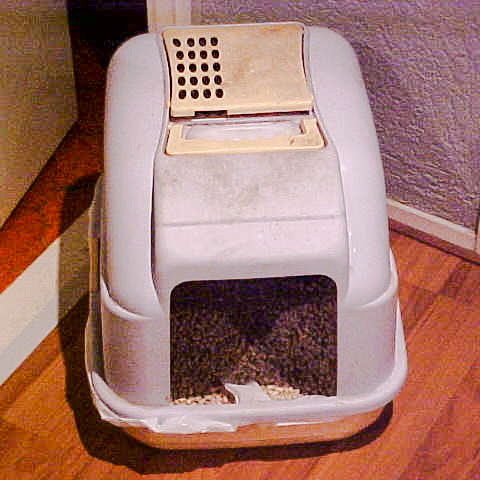Should I get a covered litter box?