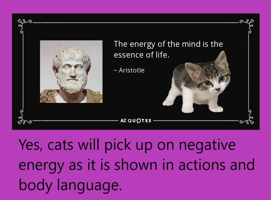 Do cats pick up on negative energy?