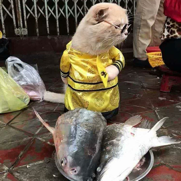 Fishmonger cat