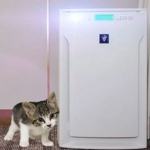 Ionic air purifier and cat