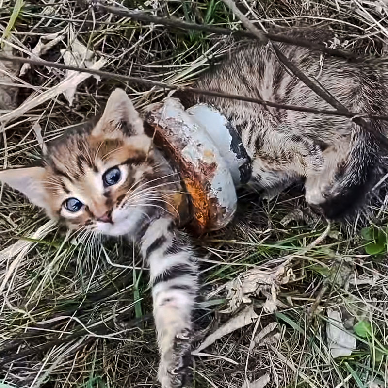 Kitten trapped inside a piece of cast-iron drainpipe