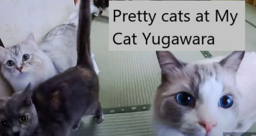 My Cat Yugawara