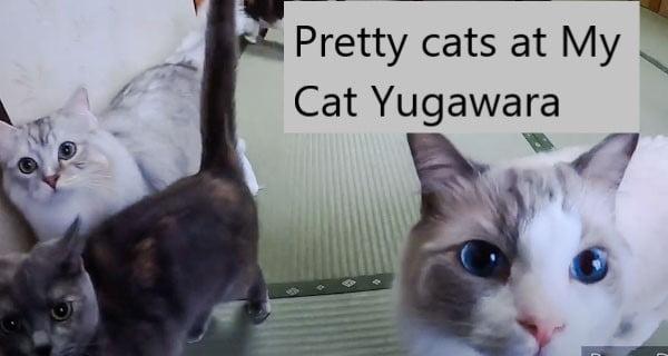 My Cat Yugawara