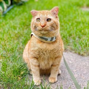 A changed expression for this ginger boy who was the saddest cat