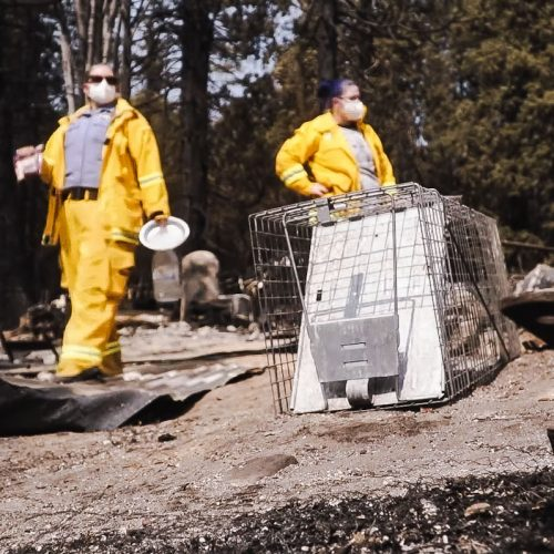 Rescuing a cat from a burnt out landscape in California Sept 2020