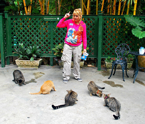 Staff member feeds the cat at Hemingway's house