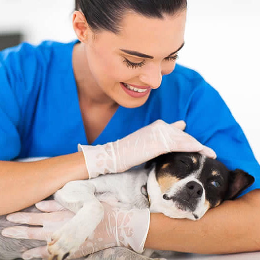 Veterinary staff with dog under Care Free Credit