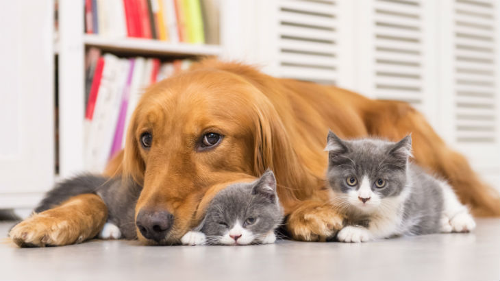 Pet insurance is poor value for money