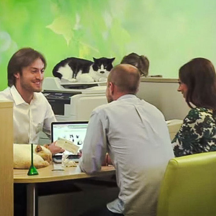 Russian bank promotion using domestic cats and superstitions (2014)