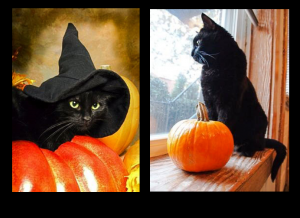 Black cats and Halloween