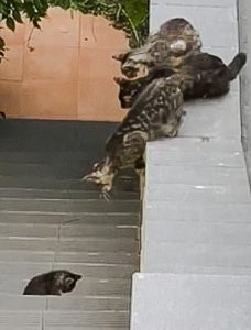Brave mom cat is tested in rescuing kitten