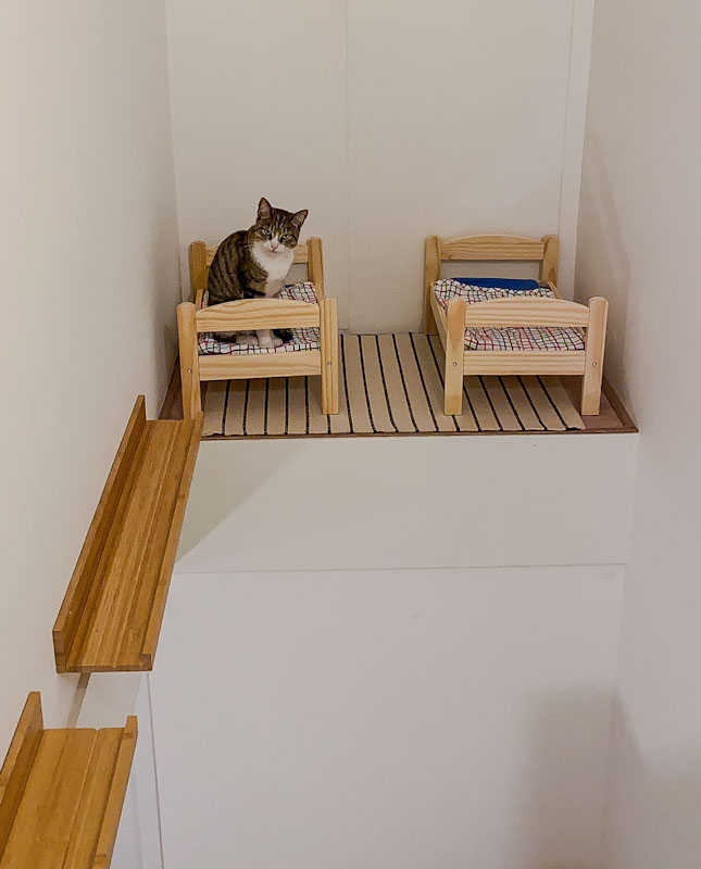 Cat bedroom