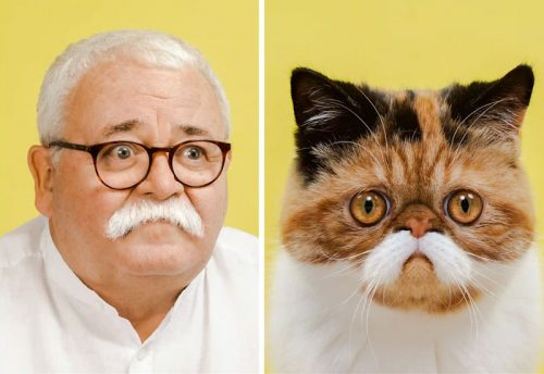 Cat looking like owner. The cat is an Exotic Shorthair with a moustache. The man is - you tell me