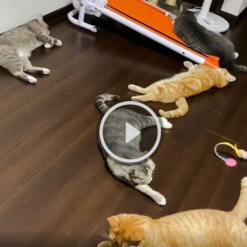 Cat owner coughs and his five cats scram