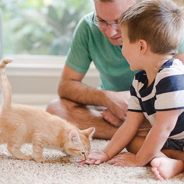 Cat ownership