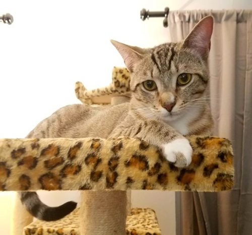 terminally ill cat was cured
