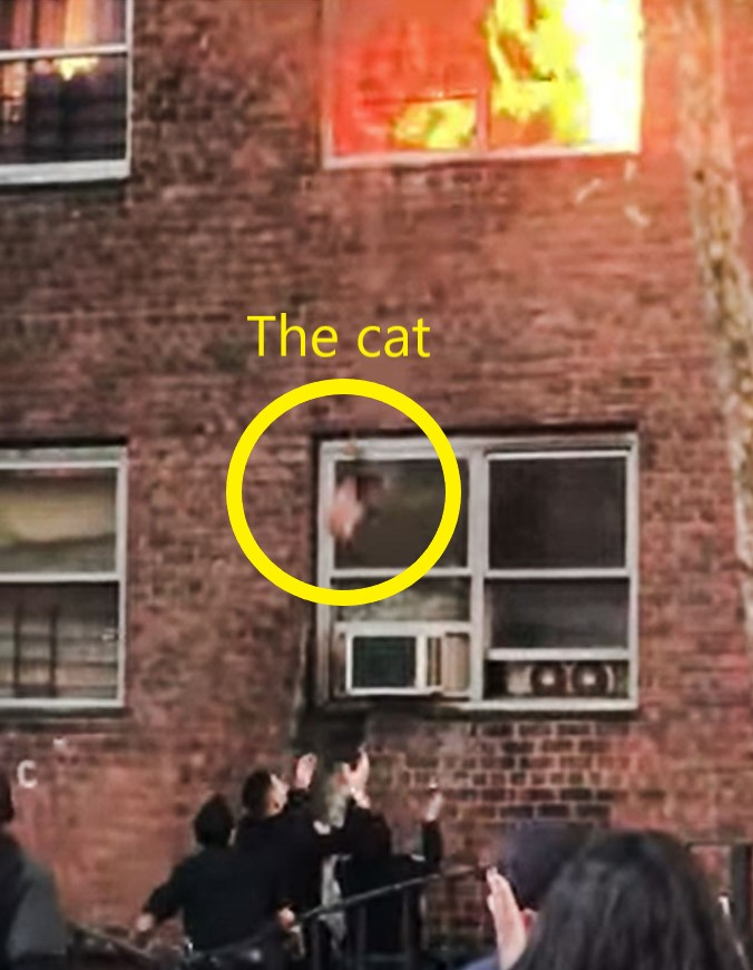 Cats jumps from burning apartment