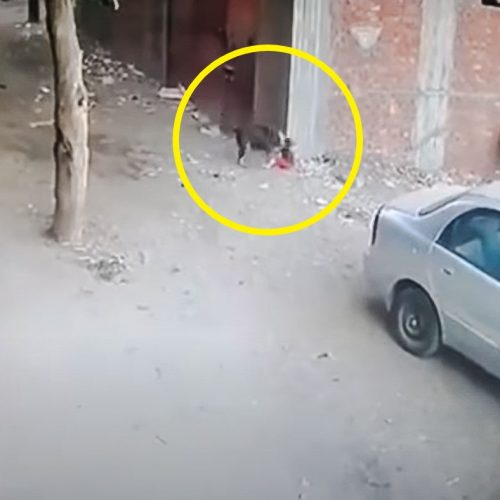 Dog attacks toddler and cat intervenes