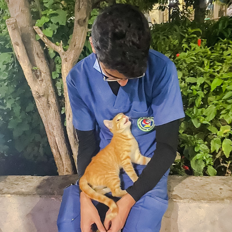 Egypt - young Egyptian street cat goes up to nurse on break and makes instant friends