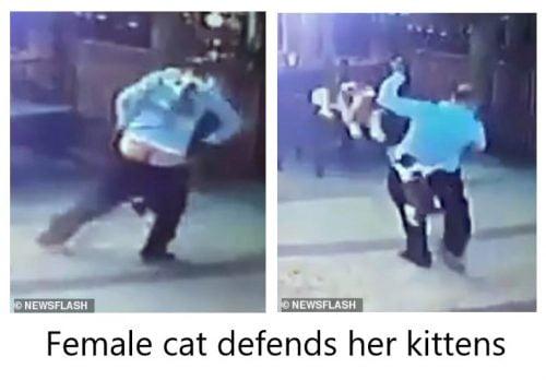 Female cat defends her kittens