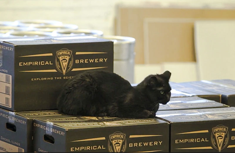 Former feral cat keeps rats at bay in brewery