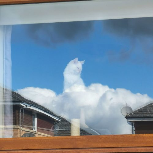 Greek cat god of clouds