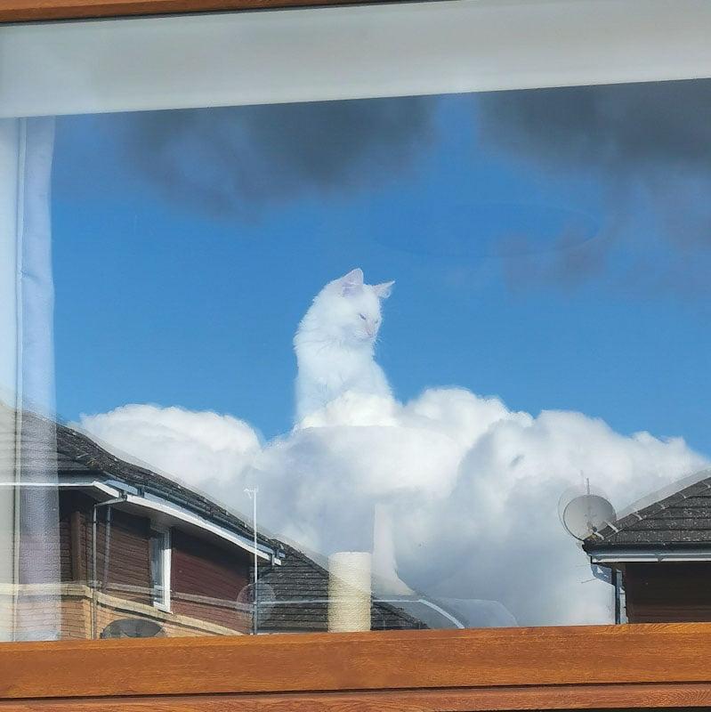 Greek cat god of clouds