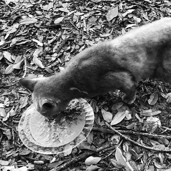 Ill feral cat being fed in Miami